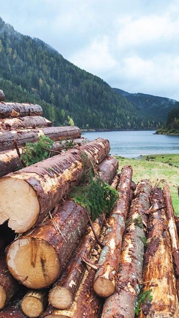 Houten stammen in de houtverwerkende industrie